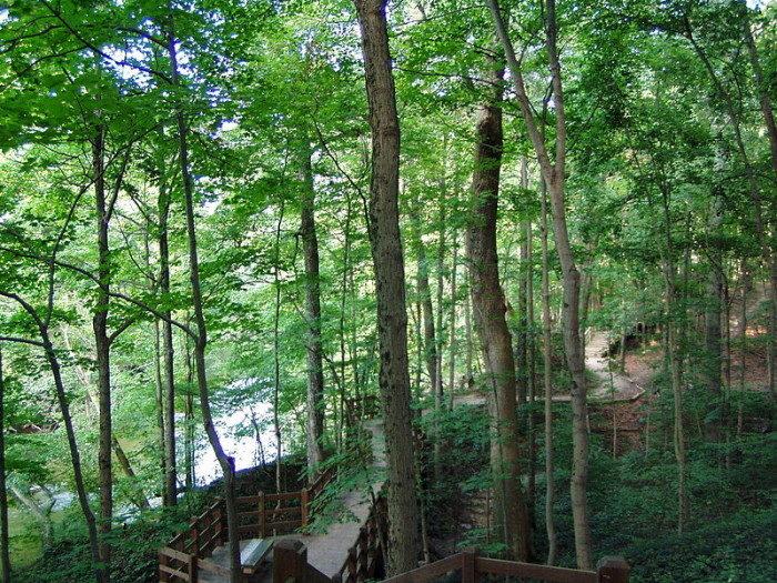 Indiana: Fall Creek Boardwalk, Fort Harrison State Park
