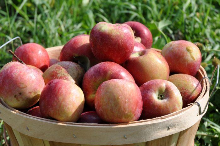 2. AppleFest