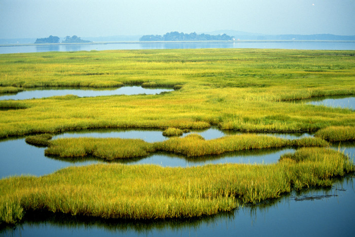 4. For those of us looking for a less vertical hike, the coastal wetlands at Parker River National Wildlife Refuge in Newburyport are a great place to wander and take in the beauty of nature. There are more than 4,700 acres of beach, dunes, cranberry bogs, forest, and freshwater marsh to explore.