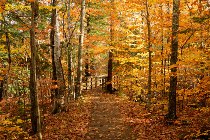 3. The woods in Carroll are the perfect embodiment of autumn.
