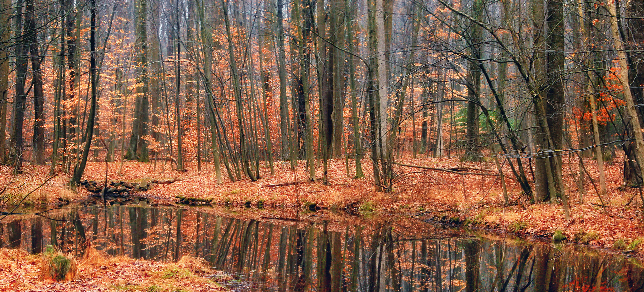 15 Photos Of The Most Beautiful Nature In Pennsylvania