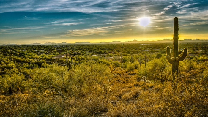12. Arizona is the only state that has all four of the country's deserts sitting within its boundaries.