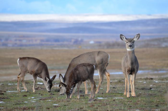 4. The wildlife