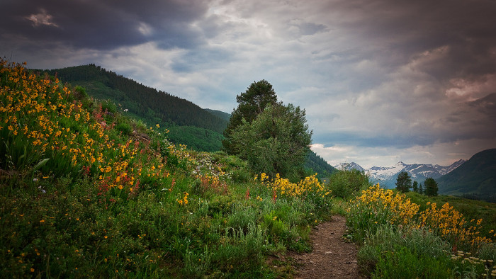 """2. The town was named the """"Wildflower Capital of Colorado"""" by the Colorado General Assembly."""