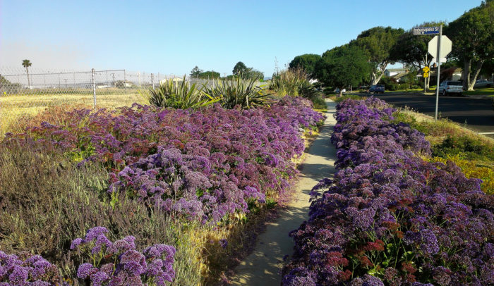 8. This heavenly walkway of flowers can be found in  Mar Vista in Los Angeles.