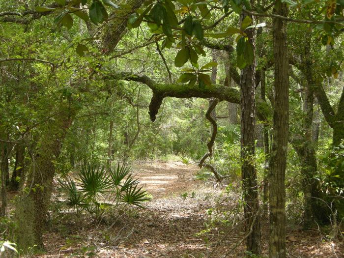 9. Bon Secour National Wildlife Refuge