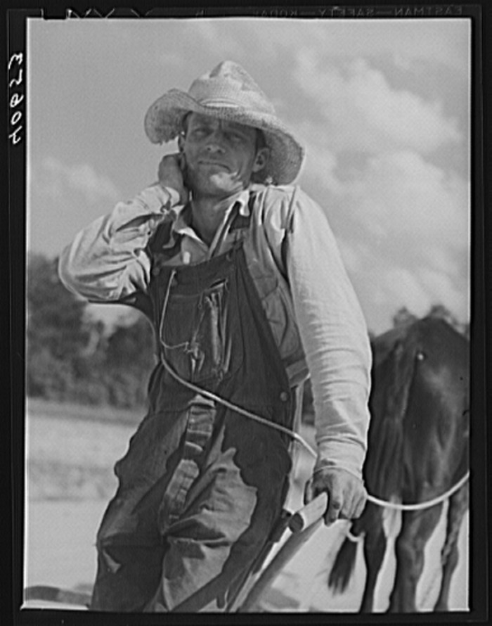 4. A North Carolina tobacco farmer near Farrington in 1940.