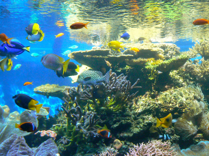 9. The Waikiki Aquarium is home to a working marine biology laboratory that is partnered with universities across the world.