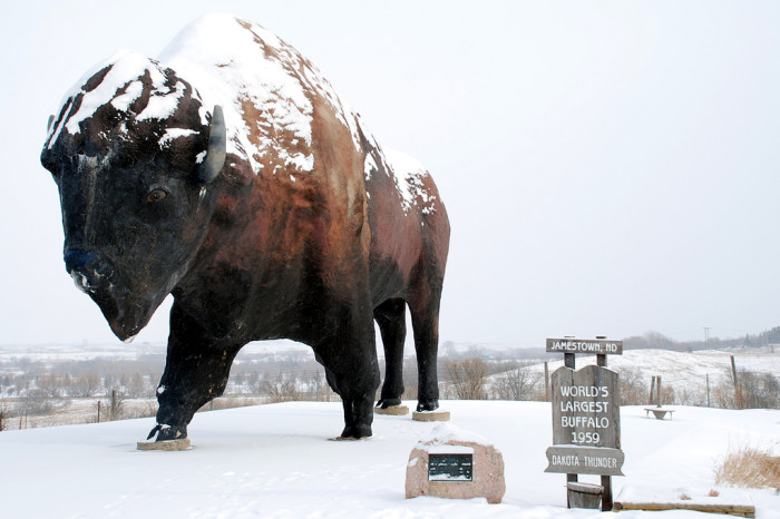 "5. The world's largest buffalo statue was named ""Dakota Thunder"" through a contest - it is also the name of one of White Cloud's calves."