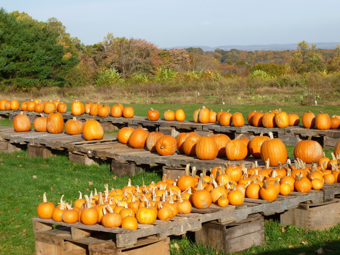 10. When October hits, you don't have to dig through boxes at the grocery store or drive 50 miles to secure a pumpkin.
