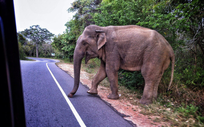 1. The same parking fee for a vehicle must be paid for an elephant tied to a parking meter.