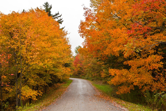 5.  They will be driving very slowly during foliage.