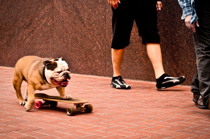2. Skateboarding without a license is illegal.