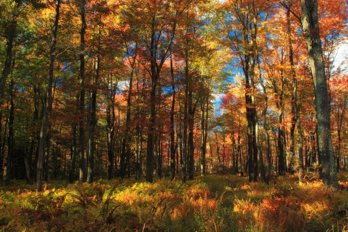 7. The changing colors of the forest in Monroe County.