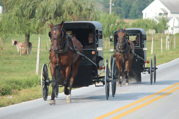9. If you've never lived near an Amish community, it can be a bit of a (fascinating) culture shock.