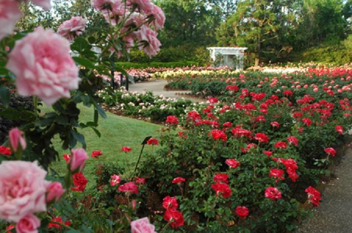 Roses In Garden: The Most Beautiful Place To Visit In Alabama