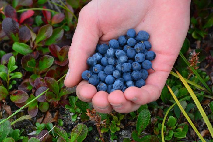 12. Go berry picking.