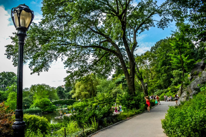 5. And there's no denying the mass amount of beautiful photo opportunities that lie within Central Park.