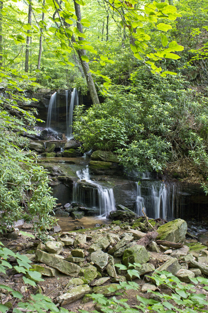 14. Cole Run Trail, Forbes State Forest
