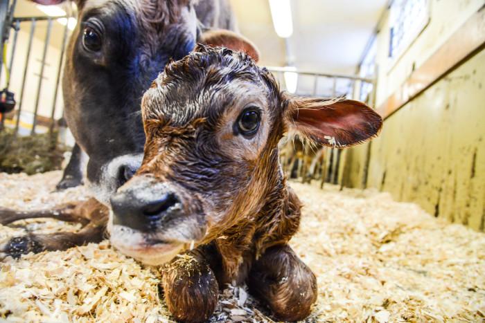 10) Baby Animal Day