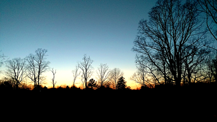 11. Again with the gorgeous treeline.