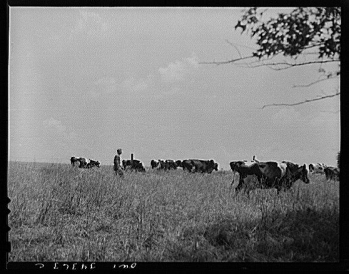 10. Farmland off Dixie Hwy in Louisville in 1943, now a subdivision.