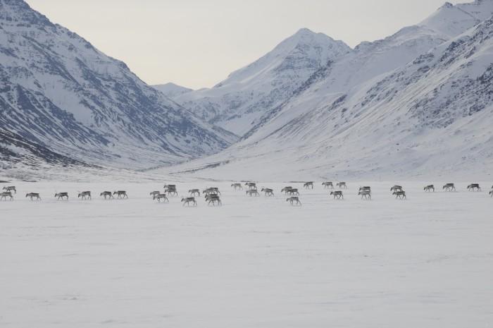 GA 2 - Flickr - National Park Service, Alaska Region