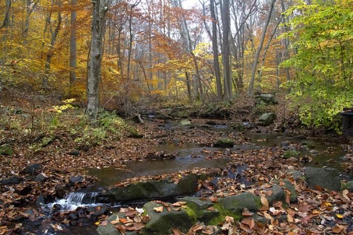 4. Hacklebarney State Park