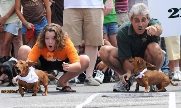 Hot dog festival dog race