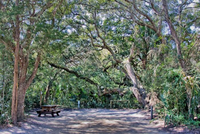 8. Anastasia State Park, St. Augustine