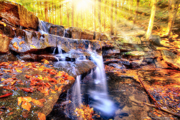 Maryland: Swallow Falls State Park