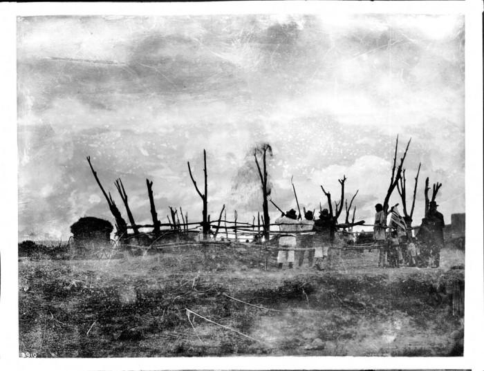 5. A group of Laguna People thresh and winnow wheat at their pueblo, circa 1900