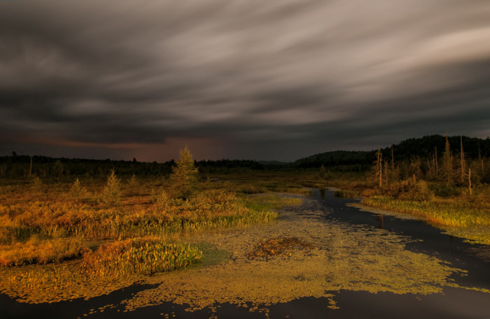 13. This ominous view of a New York marsh makes us feel like we're far from home.