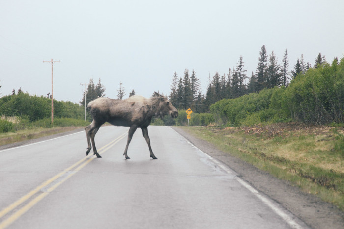 2. Being late to school because of a moose-jam was not unusual.