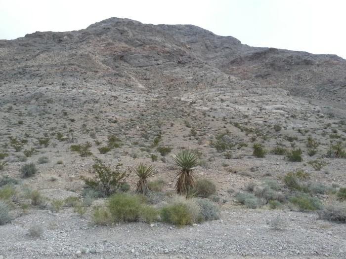 8. Lone Mountain - 2.2 Miles
