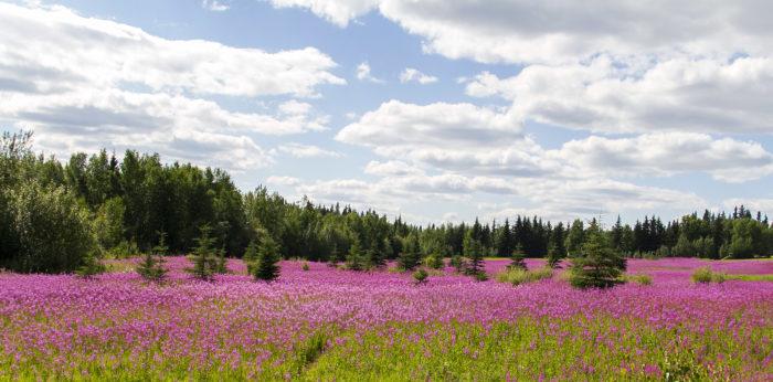 8. Natural beauty beams in Alaska.