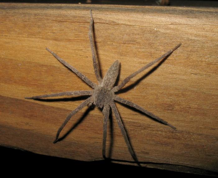7. Nursery Web Spider