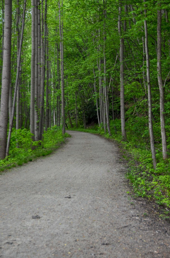 Ohiopyle Jonathan Run Trail