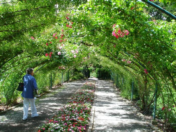15. Point Defiance Park Rose Garden, Tacoma