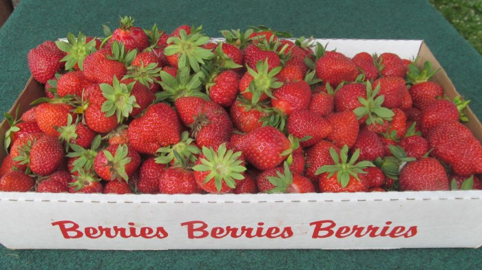 11. Von Thun Farm's Strawberry Festival, Monmouth Junction