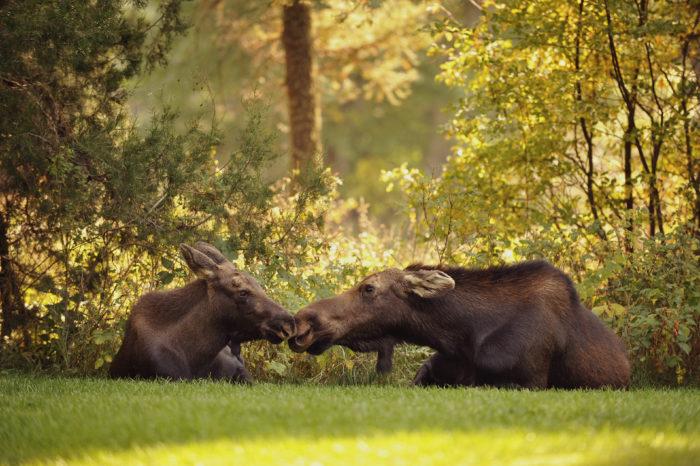10. We have incredible wildlife.