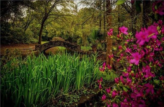 2. Jungle Gardens, Avery Island, LA