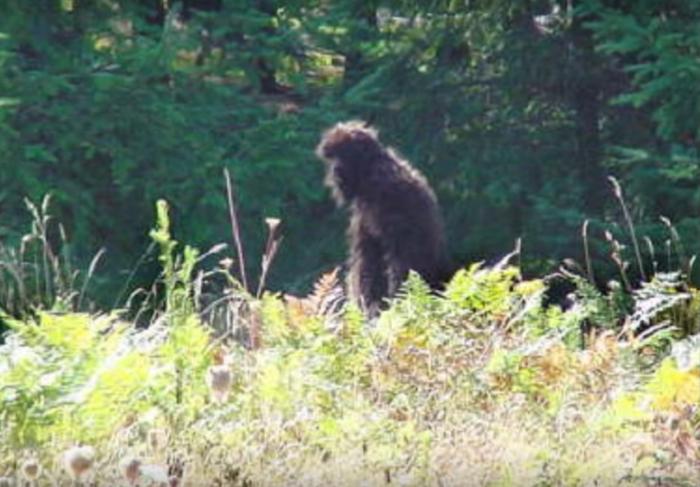 2. Bigfoot sightings
