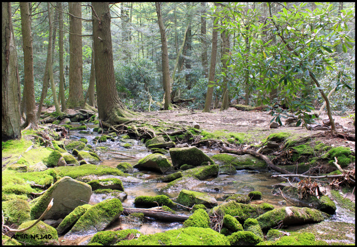 12. Shingletown Gap, Rothrock State Forest