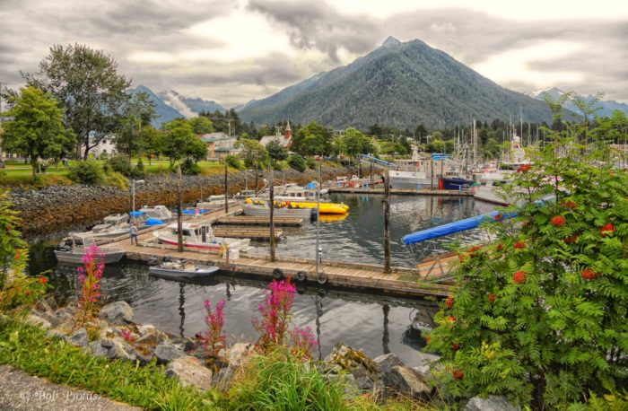 Sitka 1 - Flickr - Kool Cats Photography over 7 Million Views