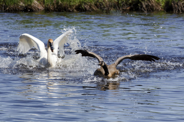 7. Stewart Island, or Bird Island in Livingston