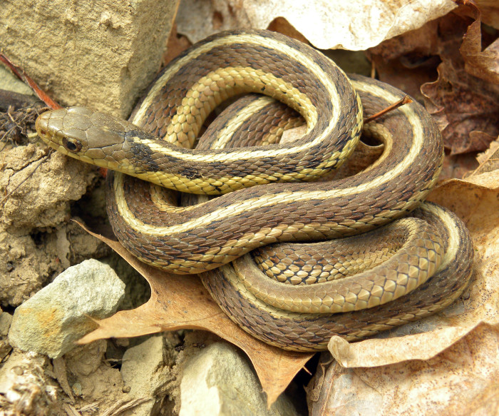 9. We accidentally killed a good snake in the garden and we feel bad.
