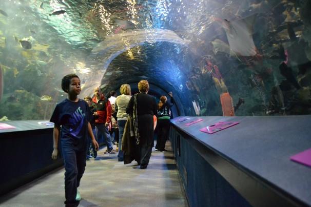 Underwater exhibit.