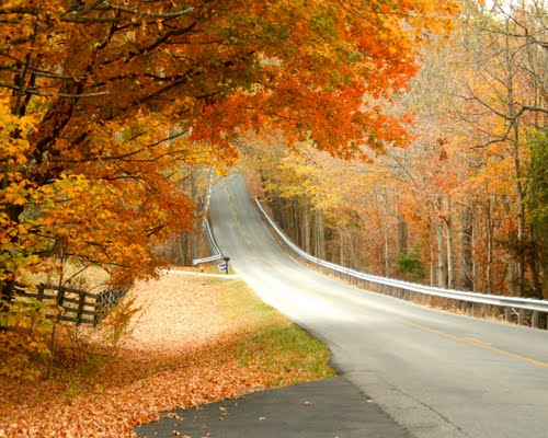 4. Despite the serene daytime beauty, tales of Sleepy Hollow woes have been told for generations. You wouldn't know it by looking at this lovely section of the road.