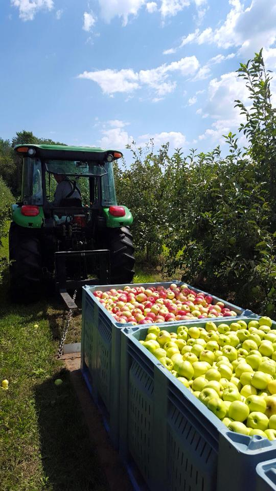 6. When the apples are out, hang out with the family at Ecker's Apple Farm.
